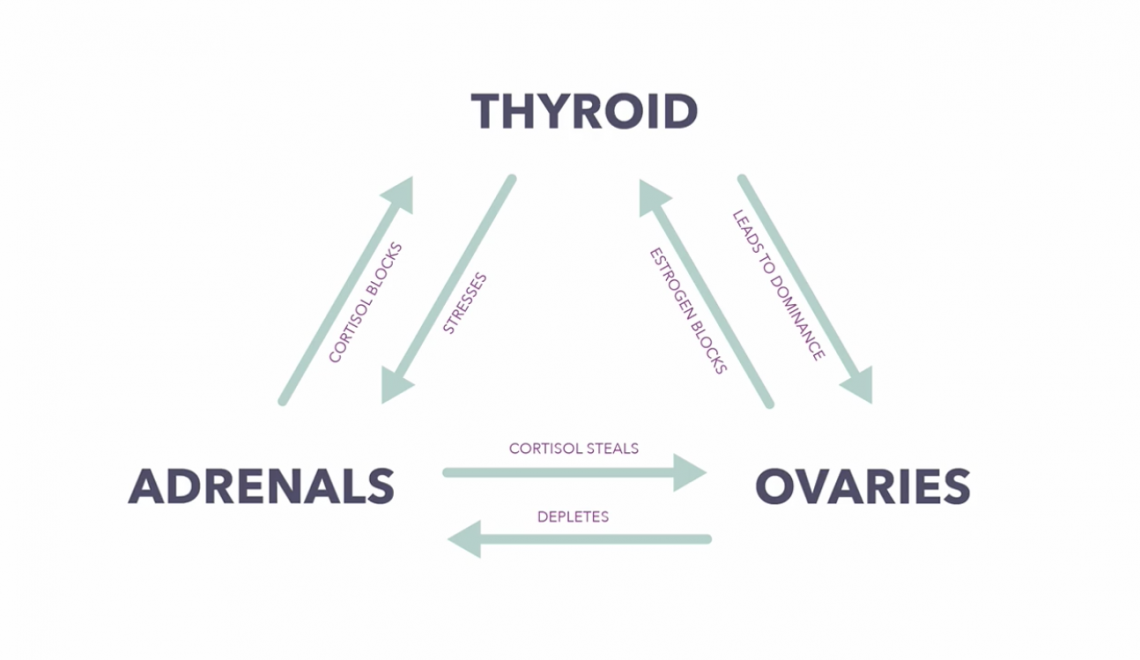 THE CONNECTION BETWEEN THE OVARIES, ADRENALS AND THYROID – PART 1